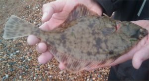 Flounder to King Rag, 1.8.2009
